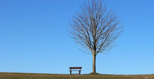 Tree 293236 640